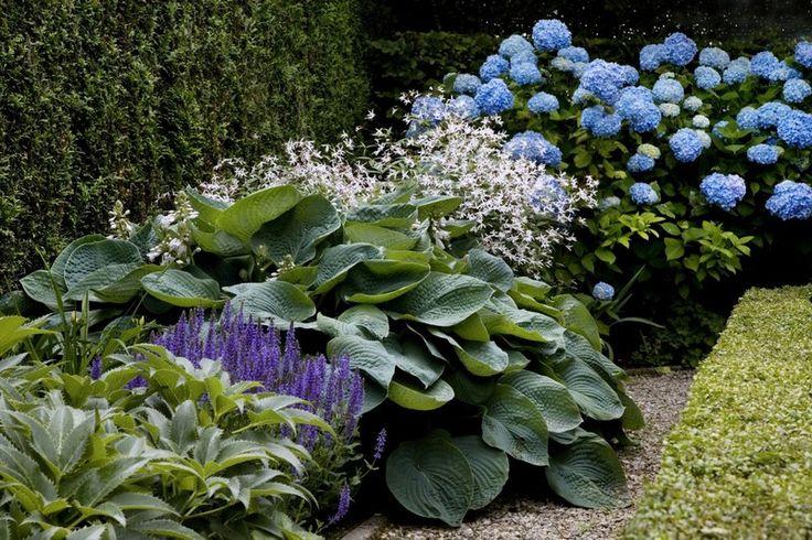 Landelijke tuin hosta